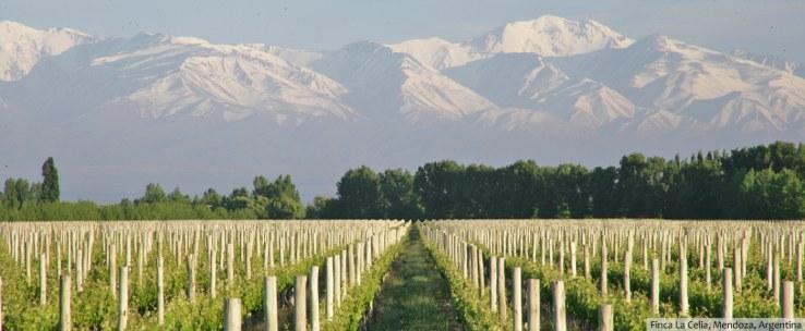 HomePage_vineyards & mountains_FincaLaCelia copie