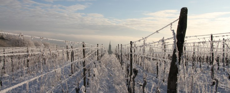 Domaine Ruhlmann under the snow 1600×650