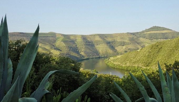 July Quinta Views